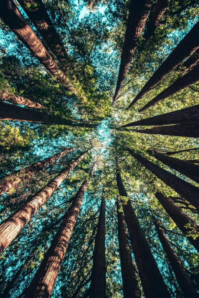 International Day of Forests Image idea - March Content Calendar Ideas + Templates