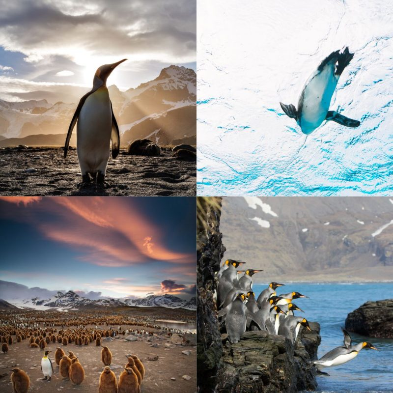 Penguin Images from Unsplash - April Content Calendar Ideas + Templates