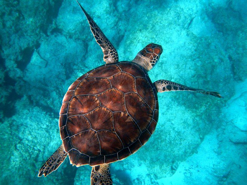 World Sea Turtle Day - June Content Calendar Ideas and Templates #June #ContentCalendar #Templates