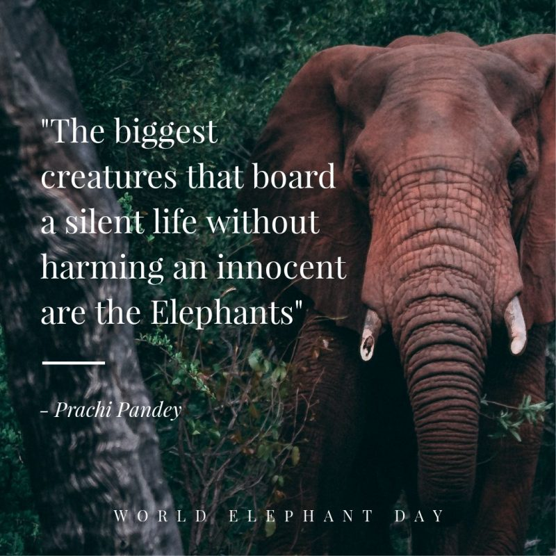 Elephant Quote Template by Easil - August Content Calendar Ideas and Templates.