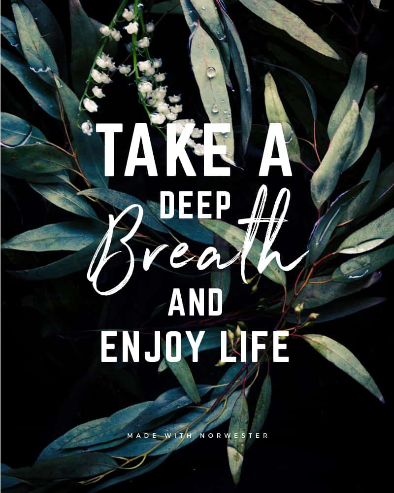 Quote made with Norwester Font - Take a deep breath and enjoy life - 93 Best Free Fonts to Create Stunning Designs